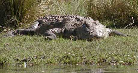 crocodile_lnzp-098_blog